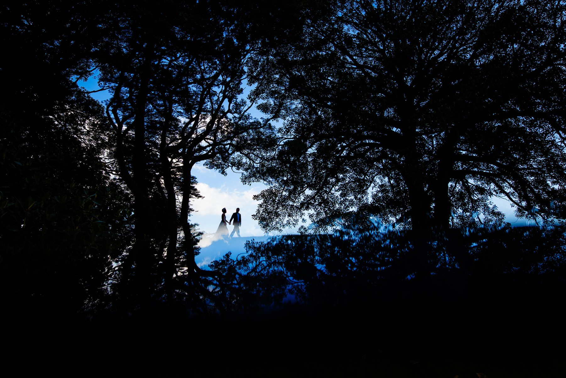 forrest, dark, wedding, outdoor, nature, photography, blue, silhouette