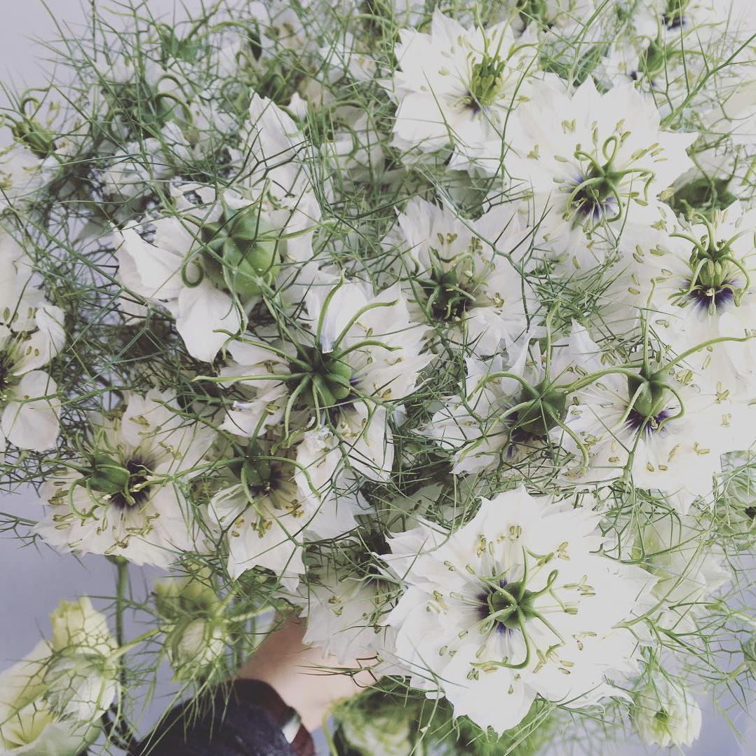 Nigella, spring, summer, guide, floral, wedding, florist, list, wedding, flowers