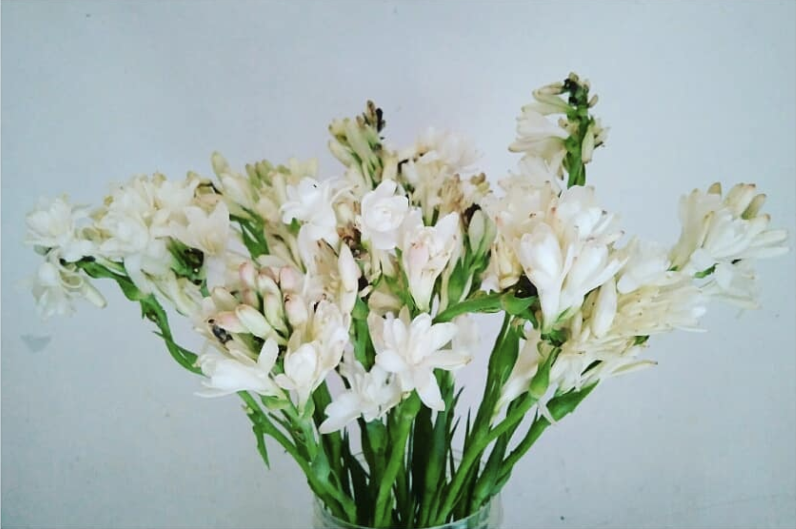 tuberose, bridal, bouquet, season, guide, wedding, planning, bride, floral, flowers, seasonal